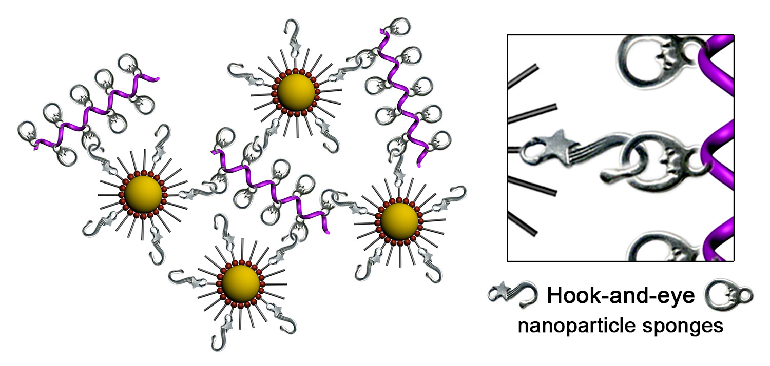 Picture of publication: Dynamic hook-and-eye nanoparticle sponges