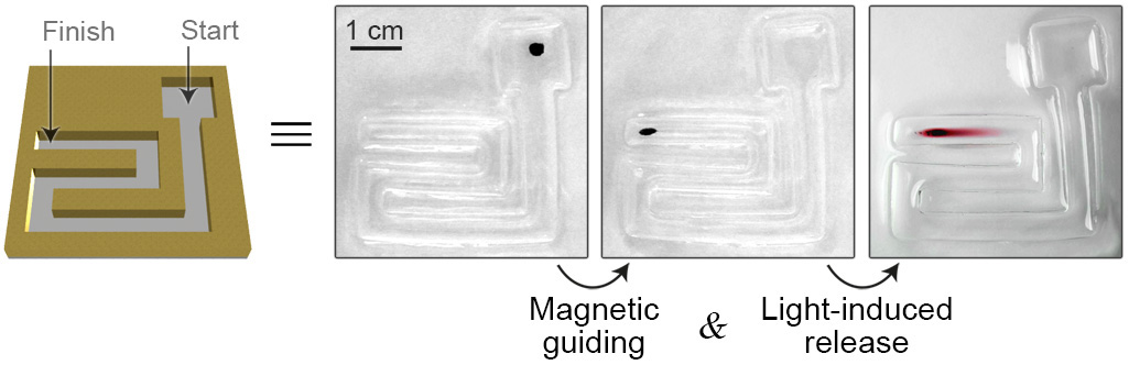 Picture of publication: Dynamically Self-Assembling Carriers Enable Guiding of Diamagnetic Particles by Weak Magnets
