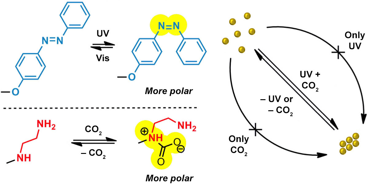 Picture of publication: Dual-responsive nanoparticles that aggregate upon simultaneous action of light and CO<sub>2</sub>