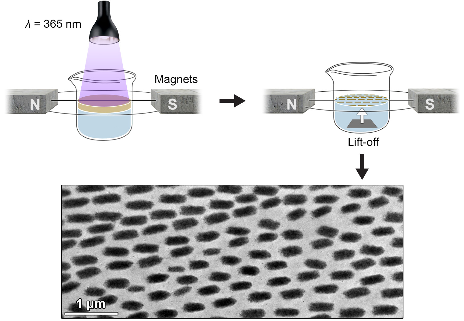 Picture of publication: Magnetic field-induced self-assembly of iron oxide nanocubes