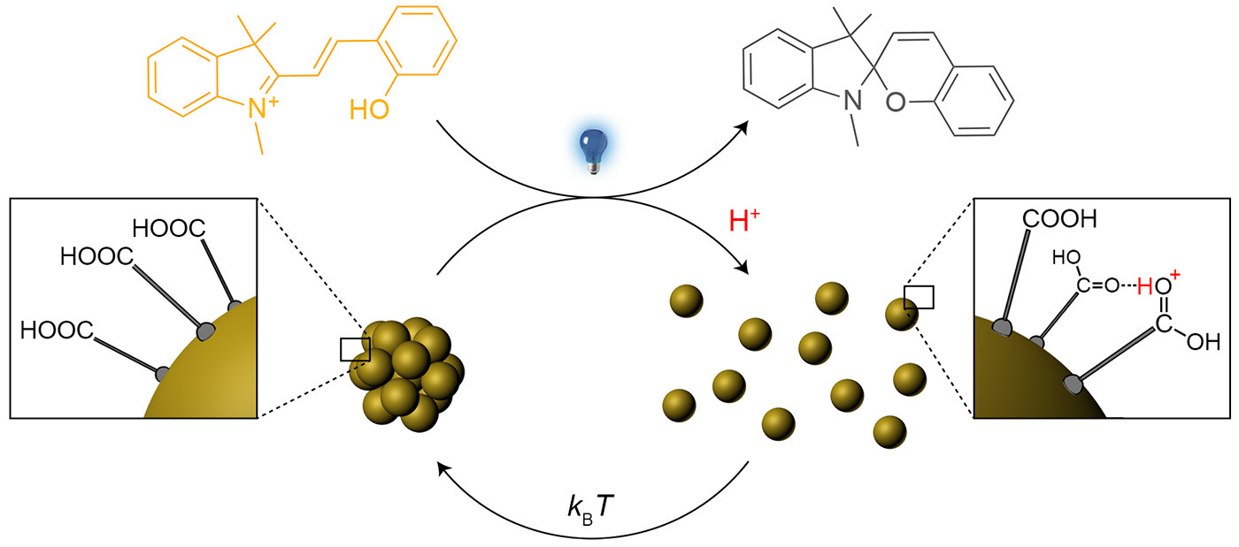Picture of publication: Light-controlled self-assembly of non-photoresponsive nanoparticles