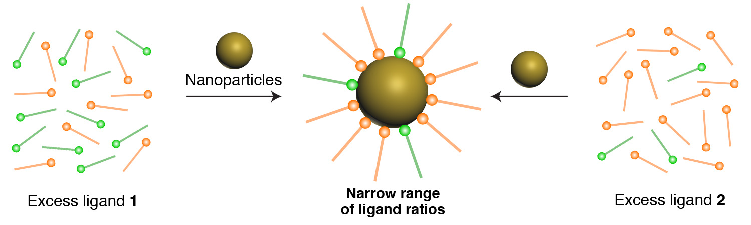 """Picture of publication: """"Precipitation on Nanoparticles"""": Attractive Intermolecular Interactions Stabilize Specific Ligand Ratios on the Surfaces of Nanoparticles"""