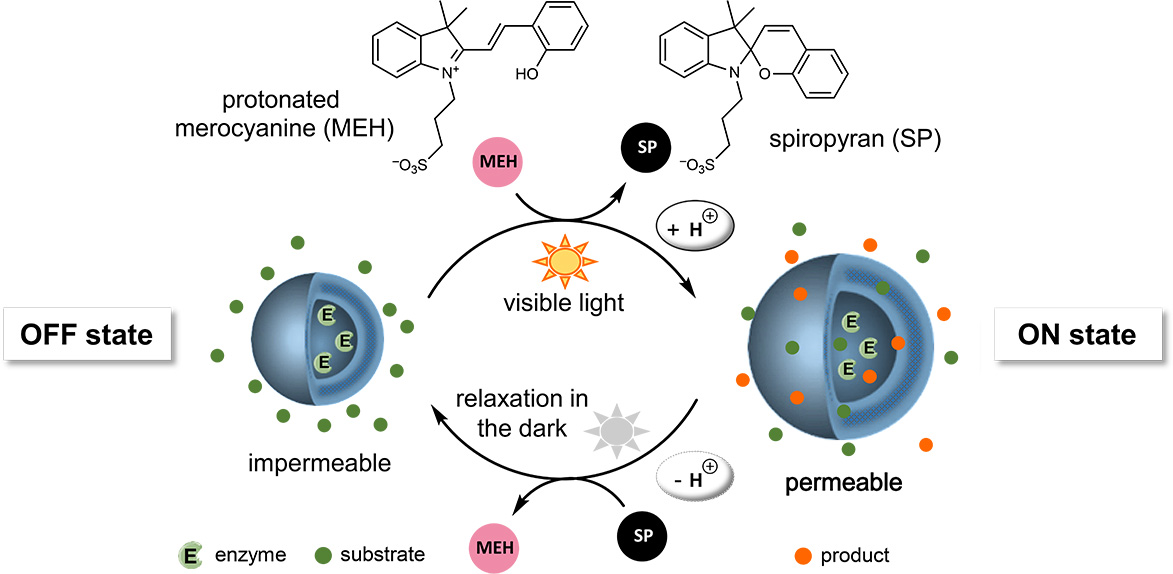Picture of publication: Light-Driven Proton Transfer for Cyclic and Temporal Switching of Enzymatic Nanoreactors